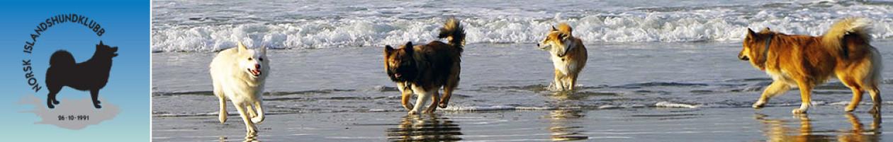 Islandshunden