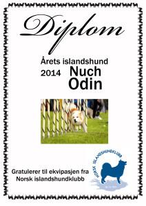 diplom årets islandshund2014