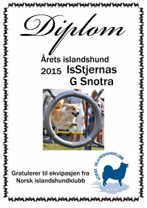 2015 islandshund Snotra